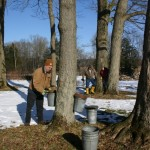 Tapping the trees in the Sugarbush