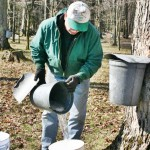 Collecting Sap at Hurryhill Farm